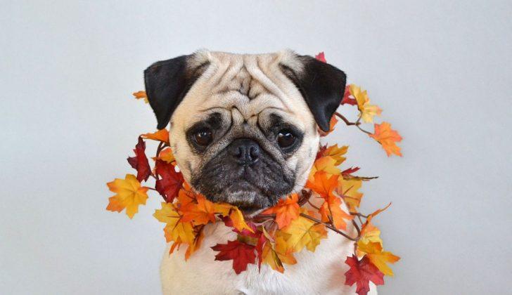 fall colors dog