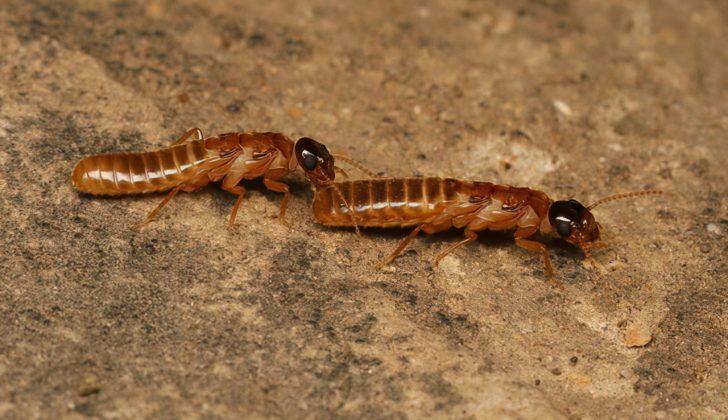 gross little termites